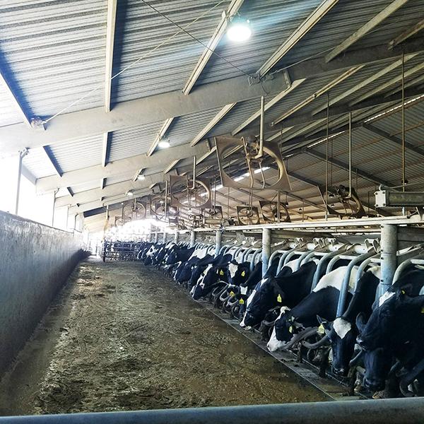 Dairy Farm - Central Valley, CA